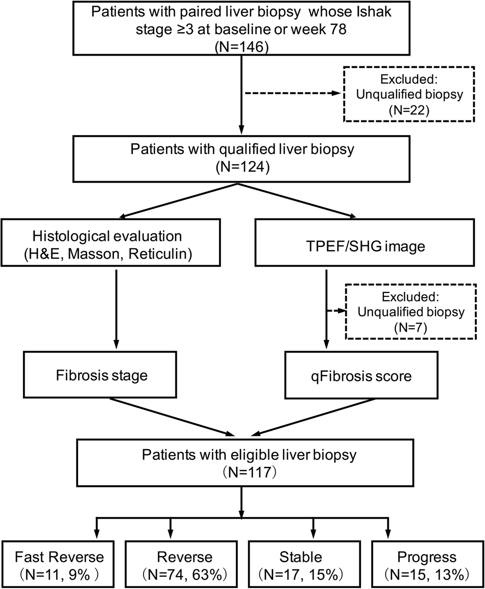 Advanced Septa Size Quanation Determines The Evaluation Of Histological Fibrosis Outcome In Chronic Hepais B Patients Modern Pathology