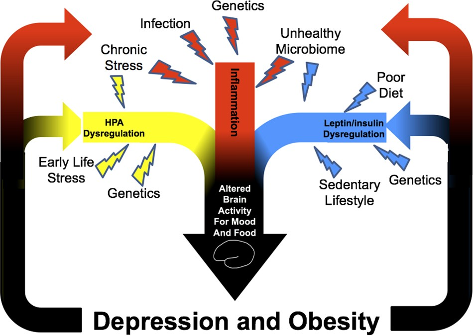 obesity genetics Genetics effecting obesity jade timothy march 30, 2016 professor dan carpenter biology 1010 true or false: the percentage of overweight children and adolescents in the us.