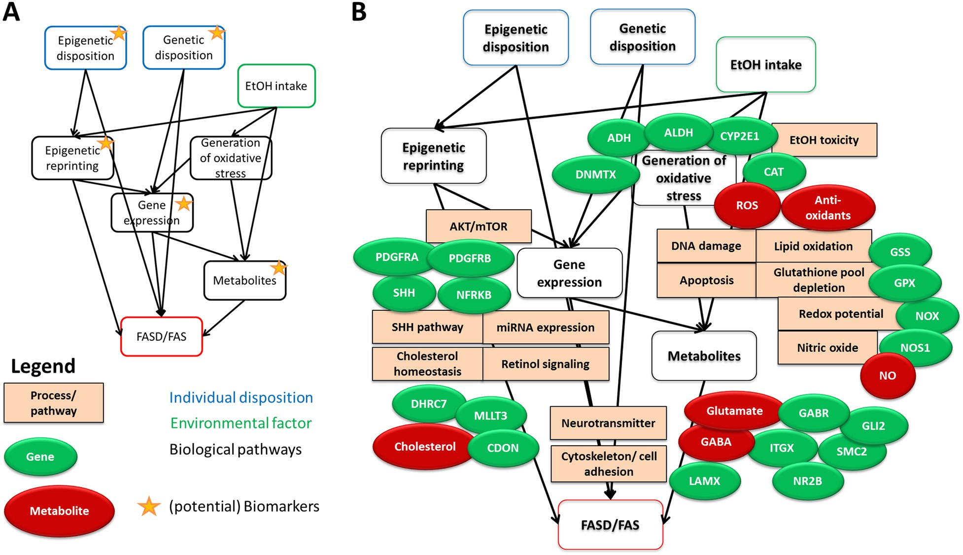 Review and gap analysis: molecular pathways leading to fetal