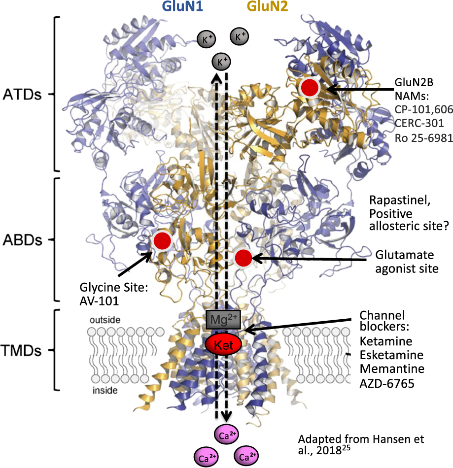 Neurobiology of rapid-acting antidepressants: convergent