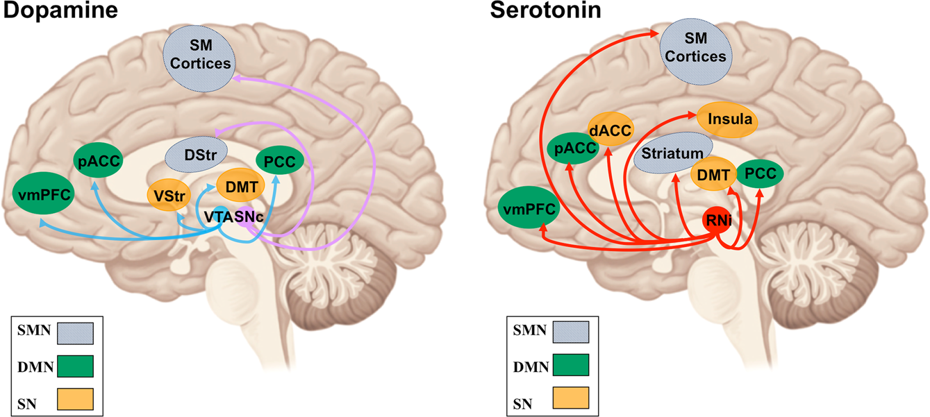 Opposite effects of dopamine and serotonin on resting-state