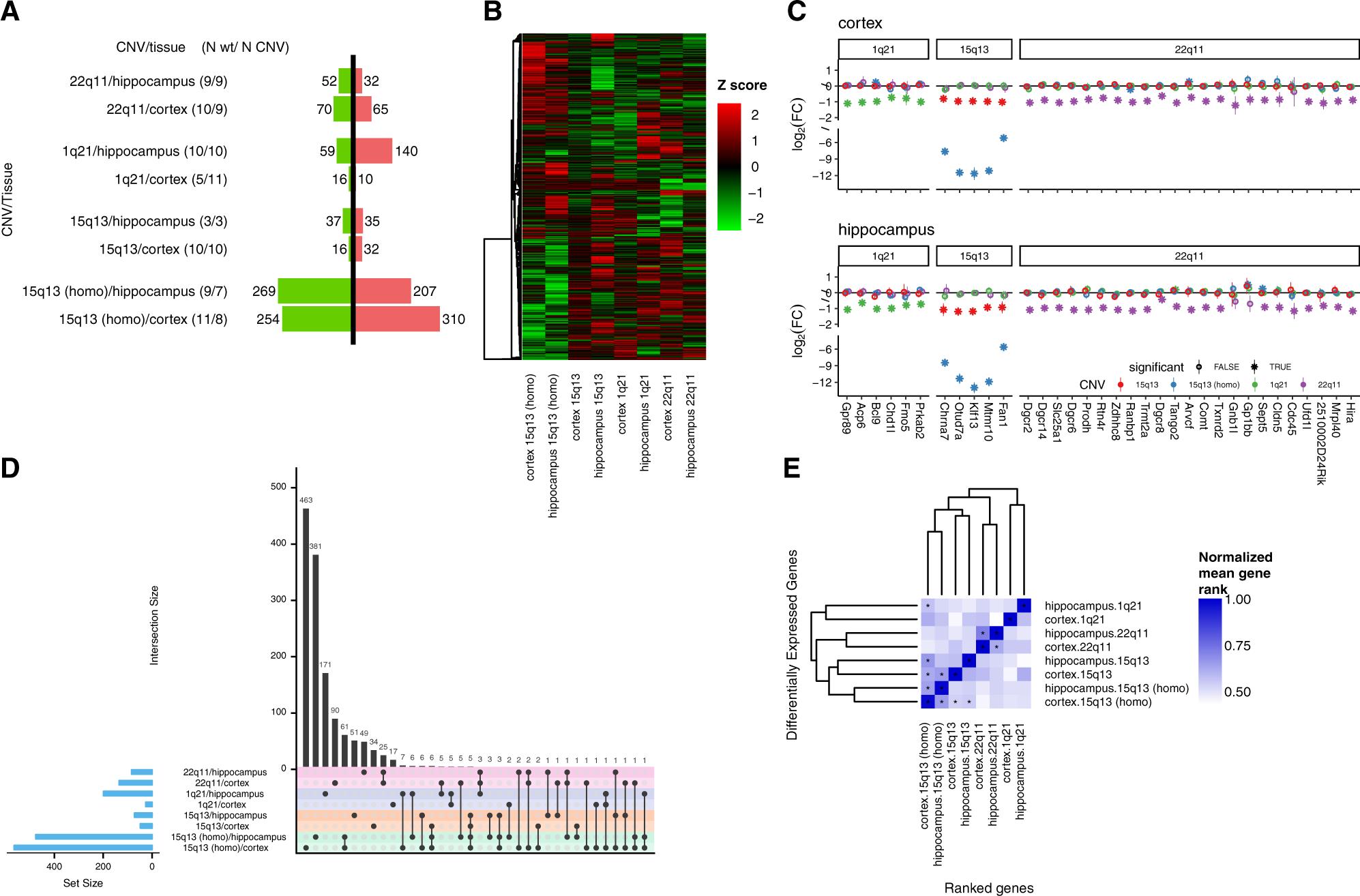 Transcriptomic networks implicate neuronal energetic abnormalities in
