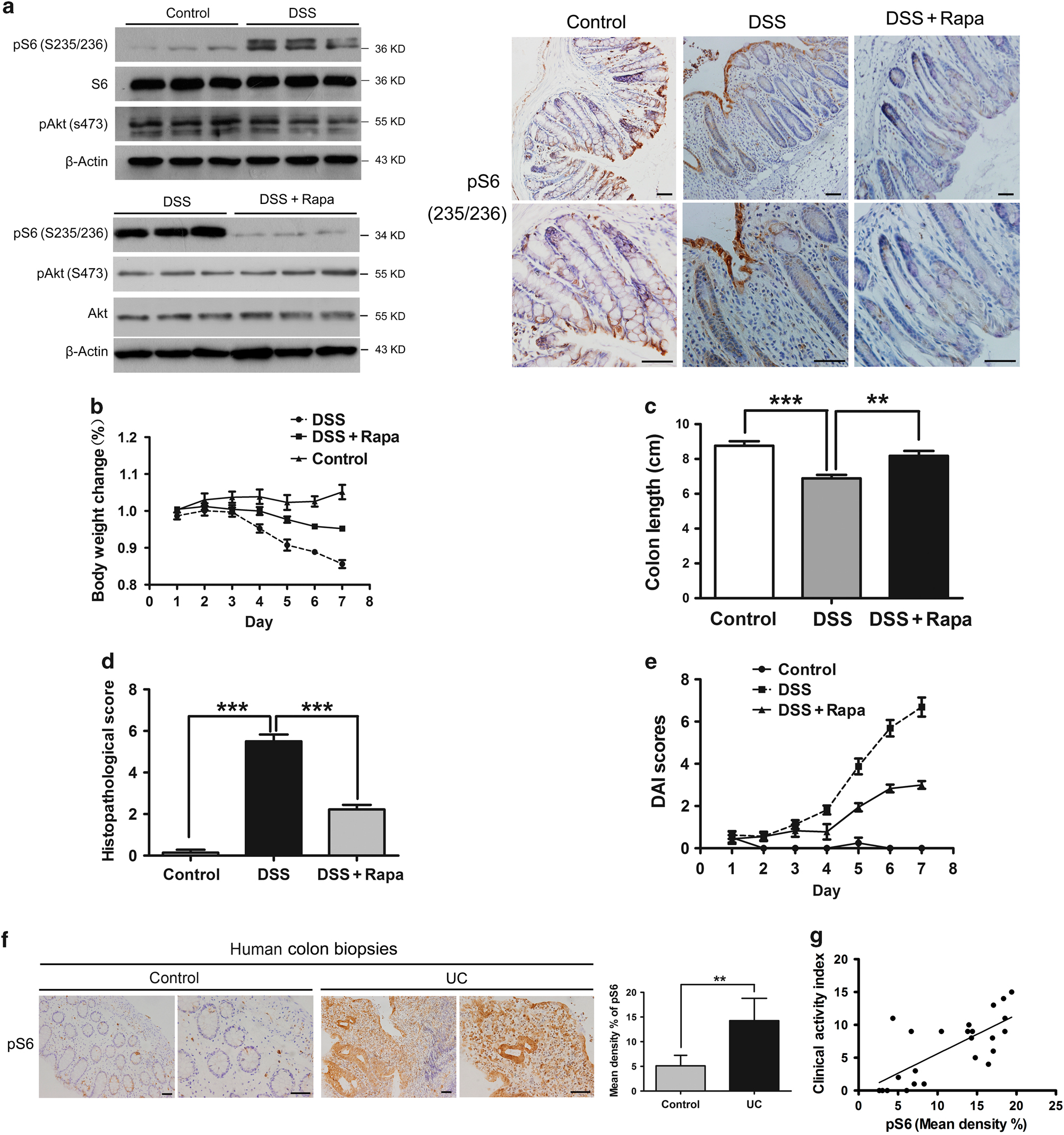 Colonic Epithelial Mtorc1 Promotes Ulcerative Colitis Through Cox 2 Cat 236 Engine Diagram Mediated Th17 Responses Mucosal Immunology