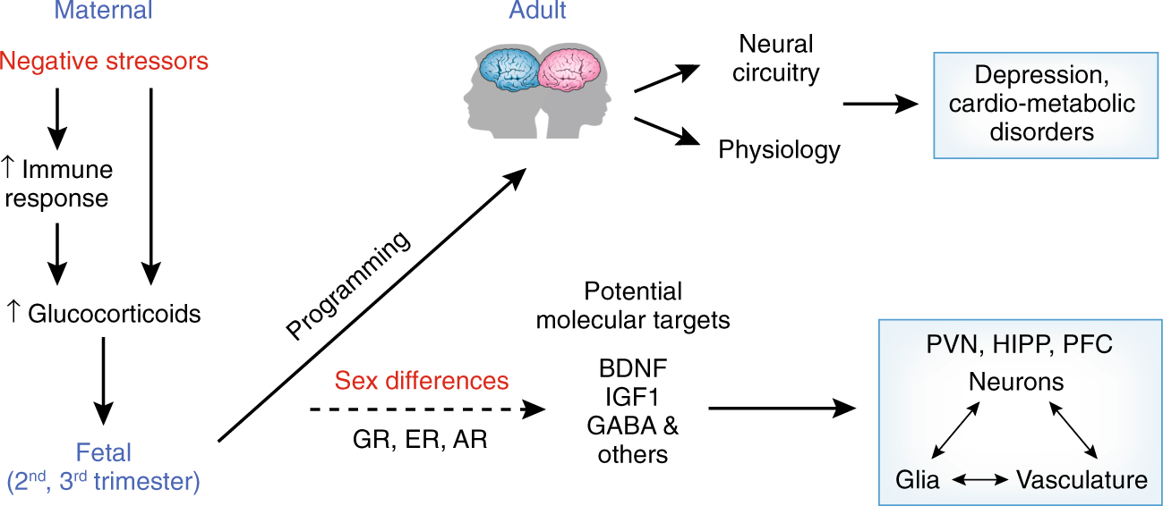 Sex Differences In Major Depression And Comorbidity Of