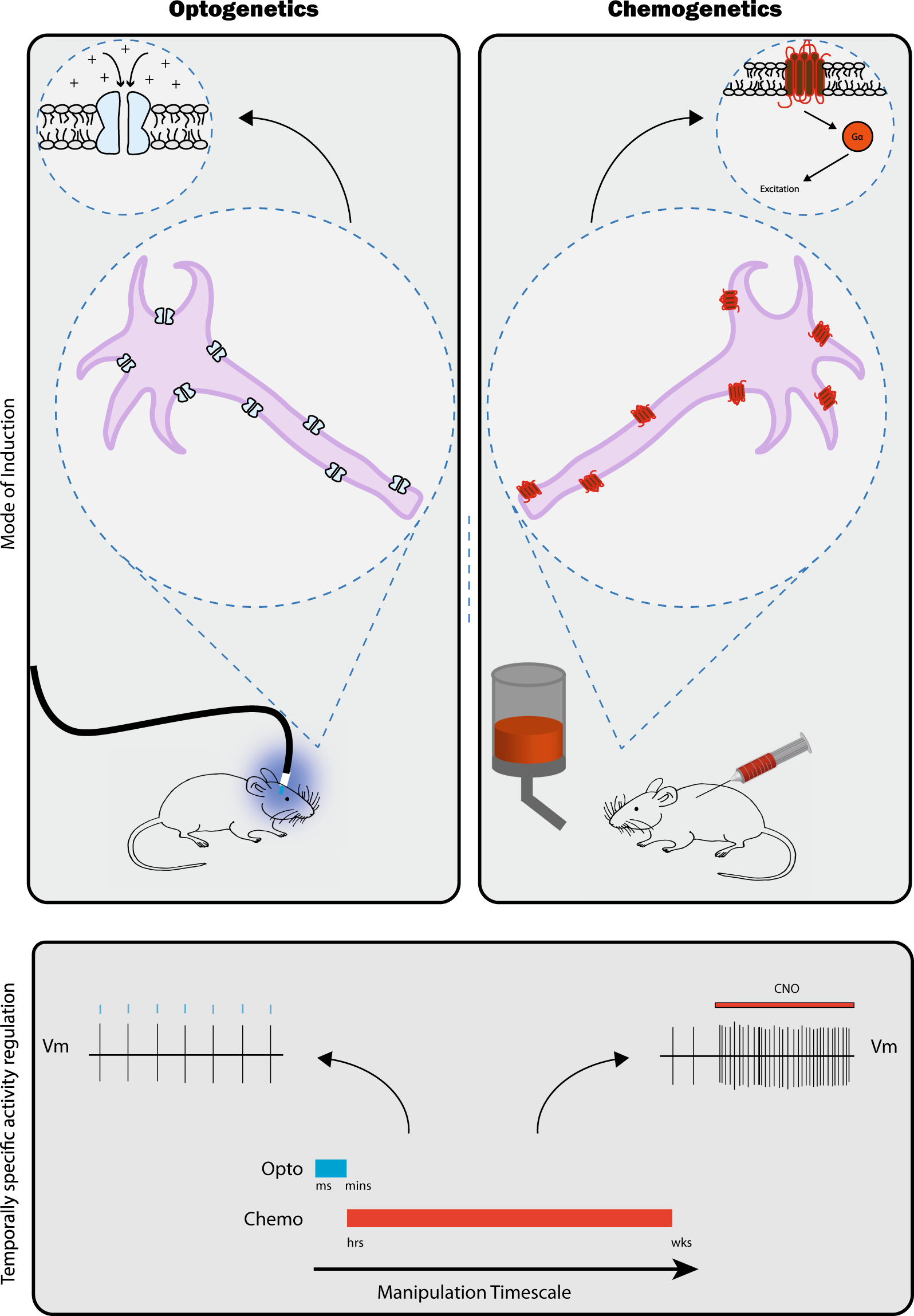 Remarkable Wiring The Depressed Brain Optogenetic And Chemogenetic Circuit Wiring 101 Orsalhahutechinfo