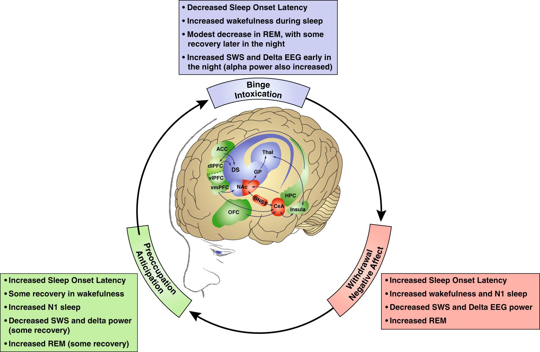 9e86a4e1 Alcohol use disorder and sleep disturbances: a feed-forward allostatic  framework | Neuropsychopharmacology