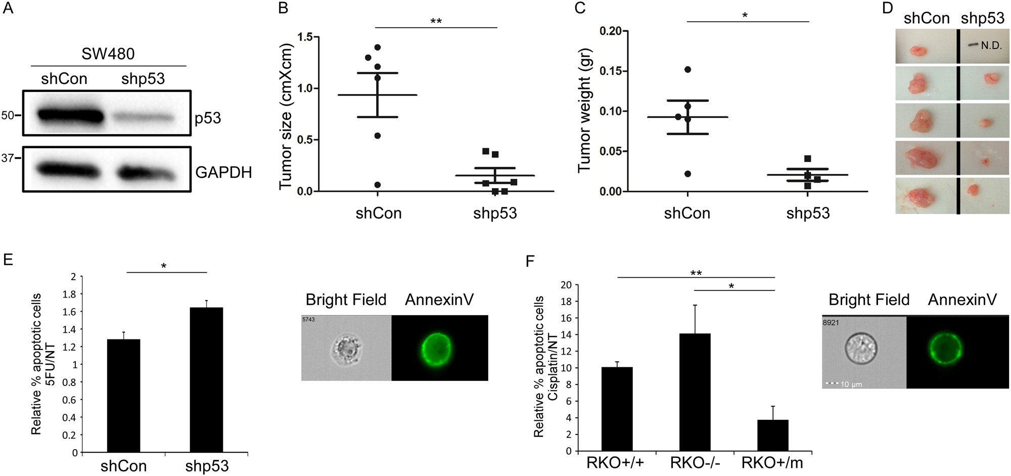 Mutant p53 gain of function underlies high expression levels of