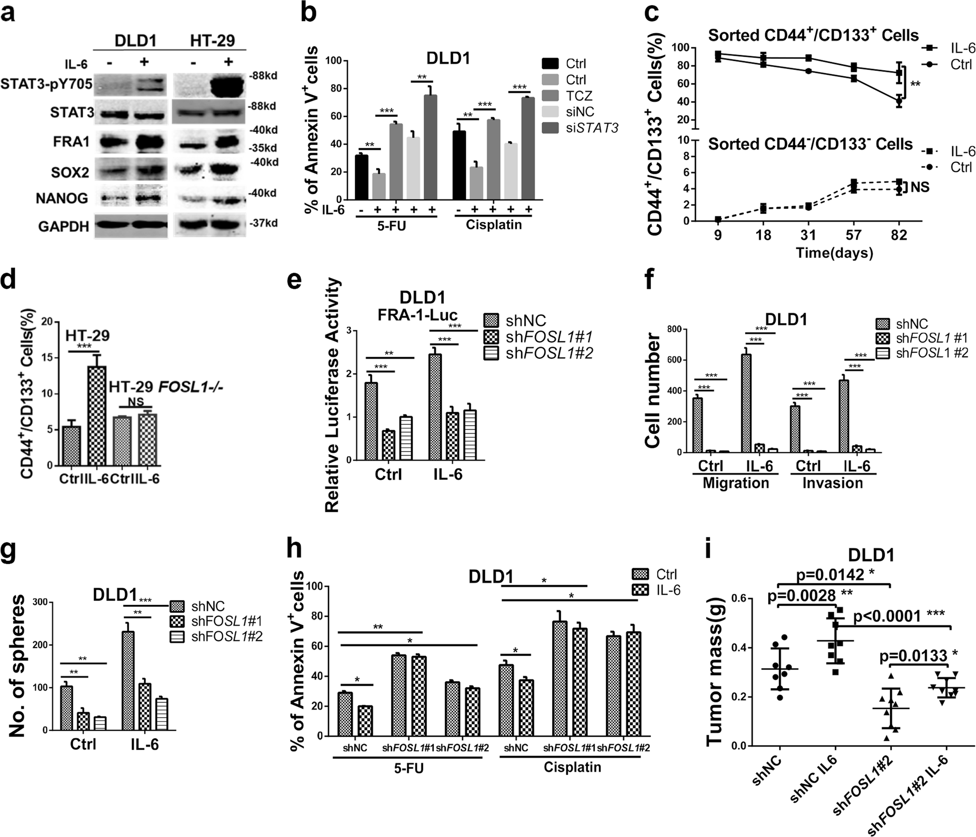 The inflammatory cytokine IL-6 induces FRA1 deacetylation