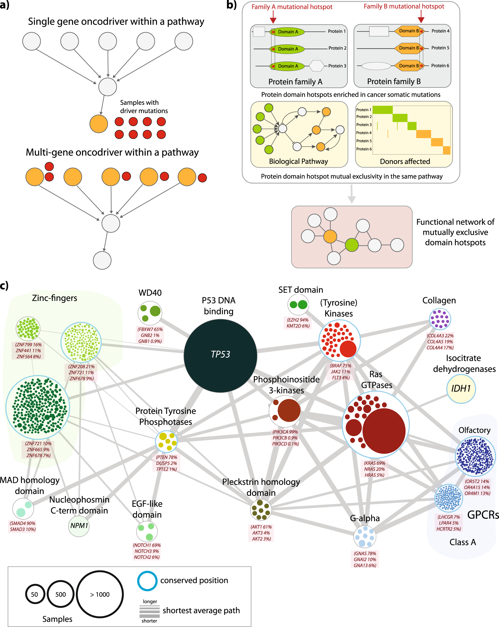 Rare, functional, somatic variants in gene families linked to cancer