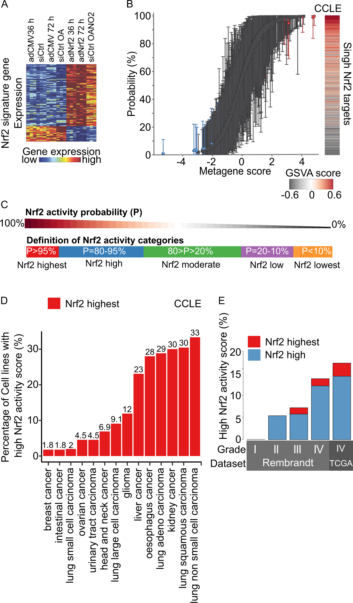 Nrf2 and SQSTM1 /p62 jointly contribute to mesenchymal transition and