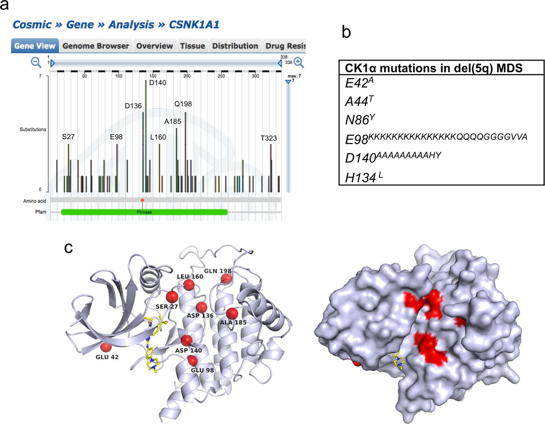 Tumor-derived CK1α mutations enhance MDMX inhibition of p53