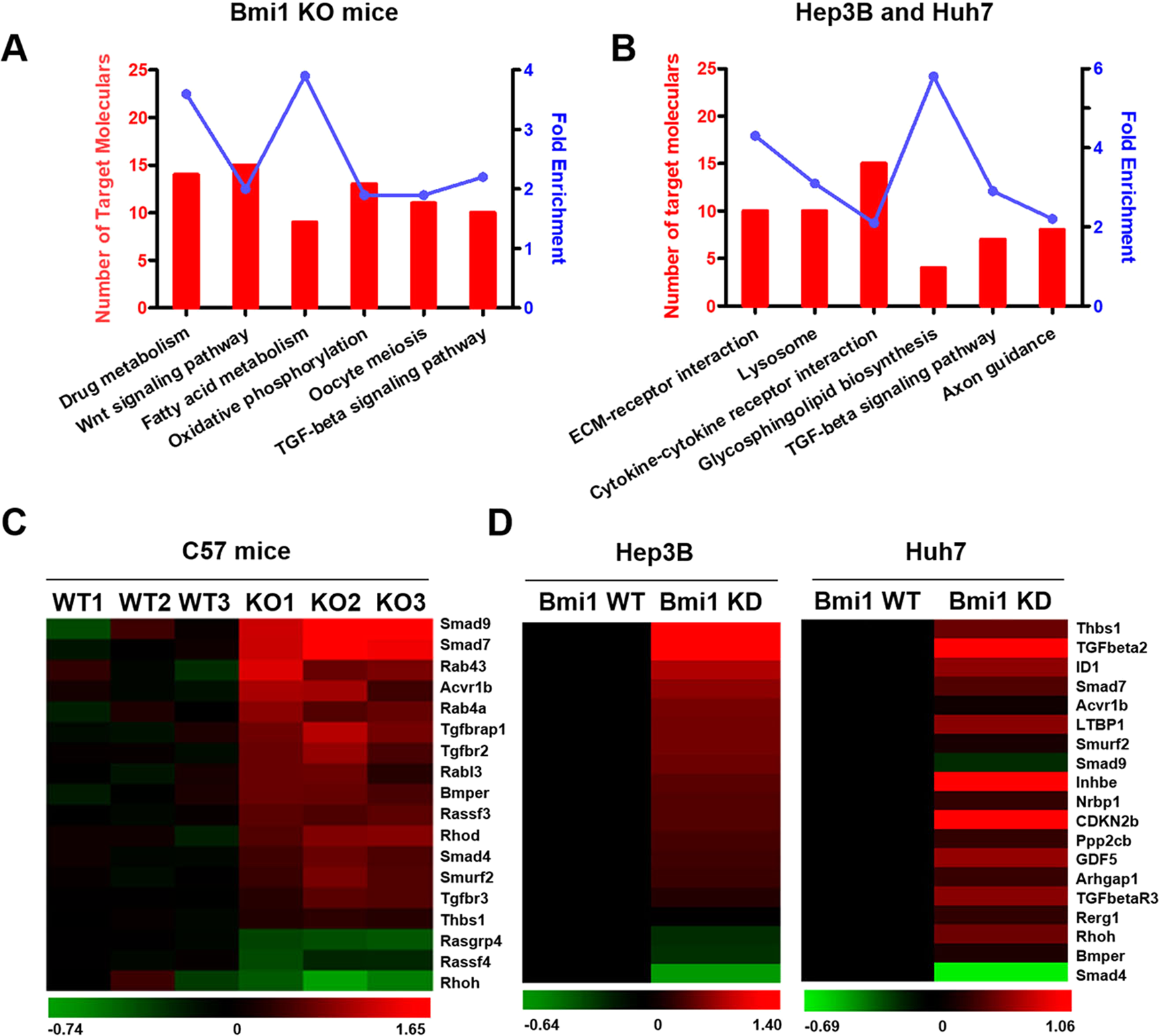 Bmi1 drives hepatocarcinogenesis by repressing the TGFβ2/SMAD sig