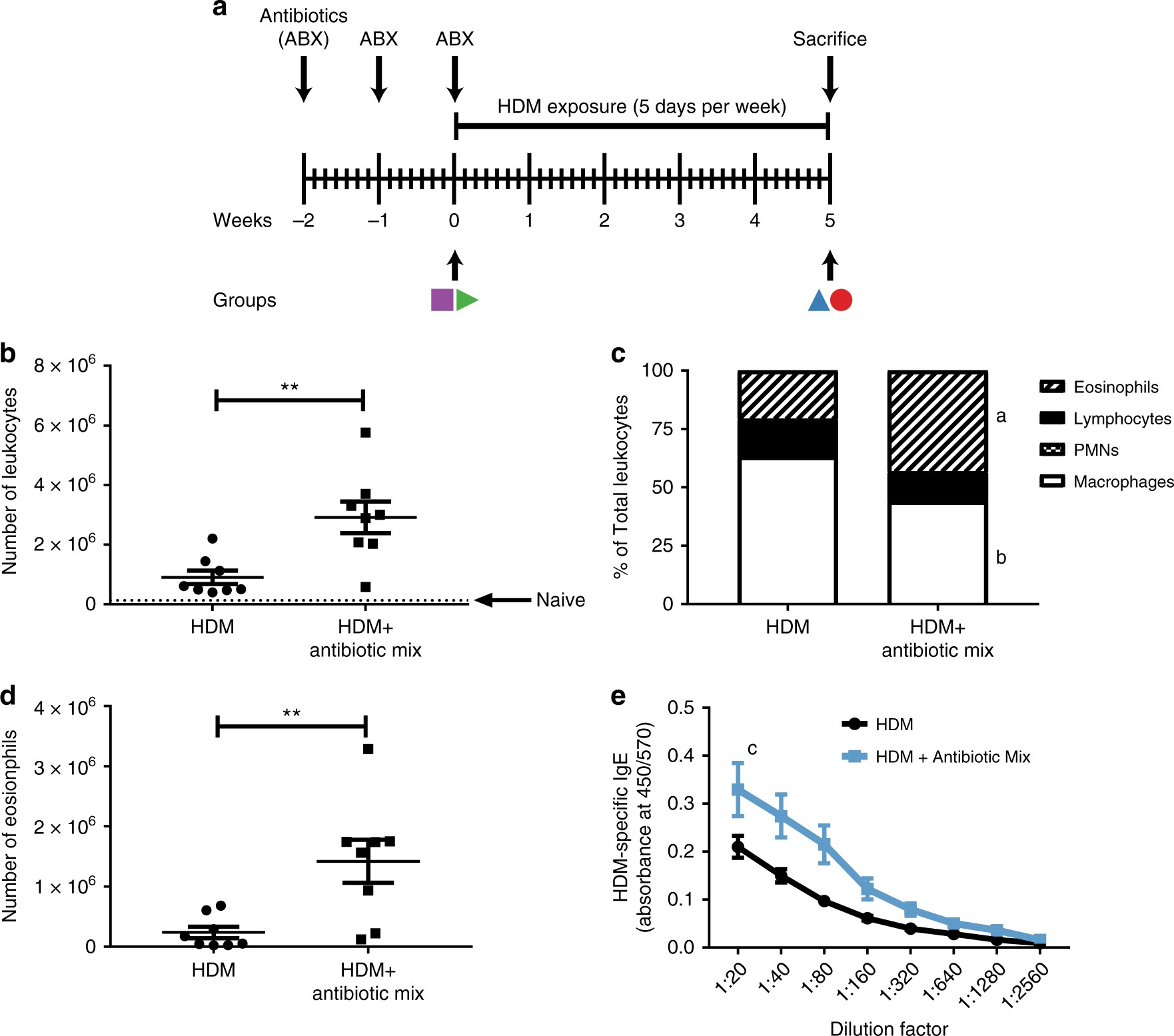 Early-life antibiotics attenuate regulatory T cell generation and increase  the severity of murine house dust mite-induced asthma | Pediatric Research