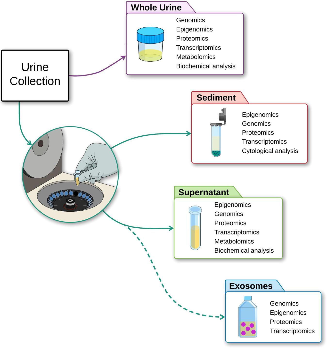 Új lehetőségek és bevált utak a prosztatarák laboratóriumi diagnosztikájában - PDF Free Download