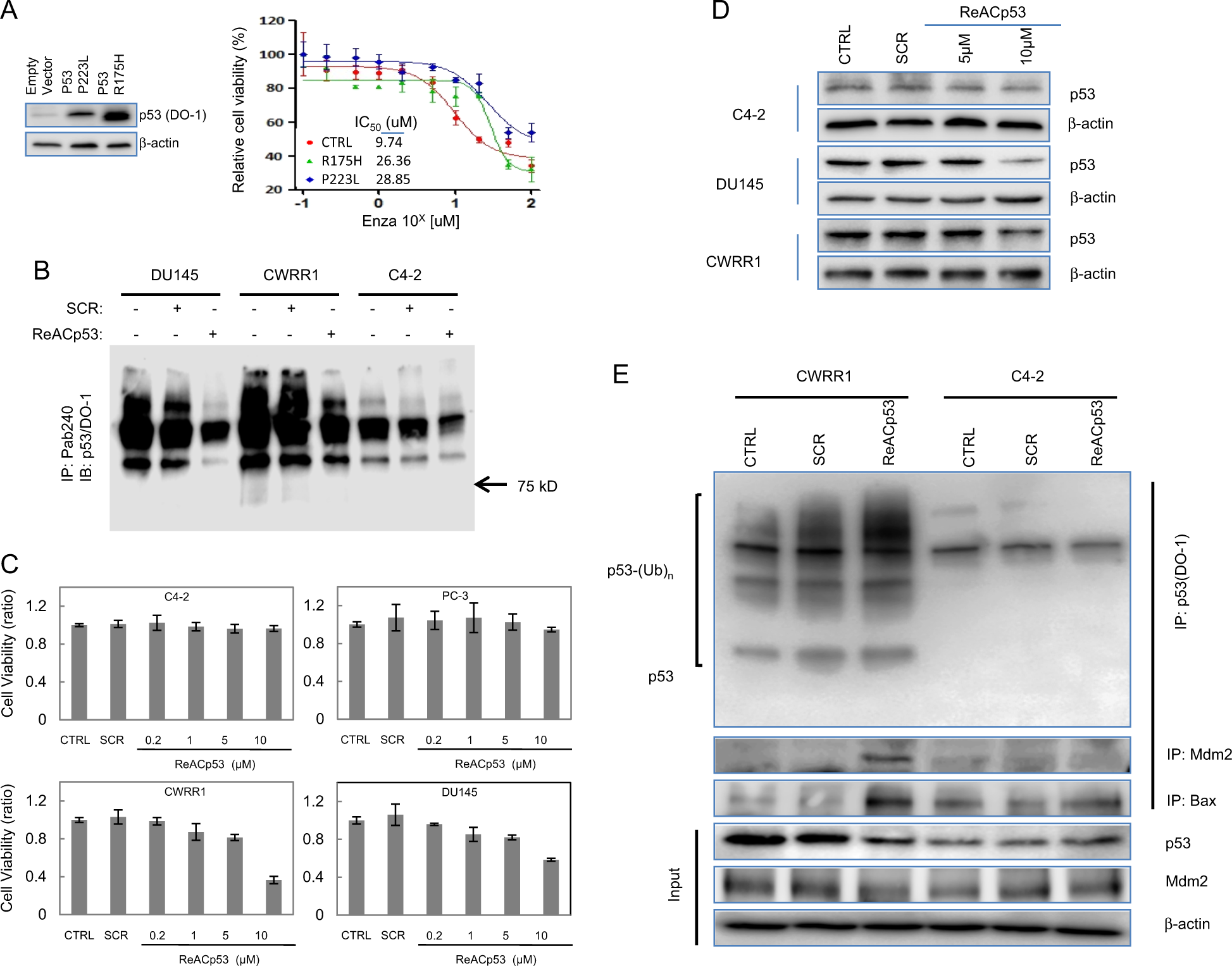Therapeutic potential of ReACp53 targeting mutant p53 protein in CRPC