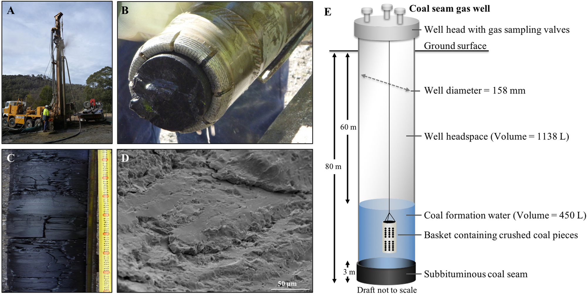Long-term succession in a coal seam microbiome during in