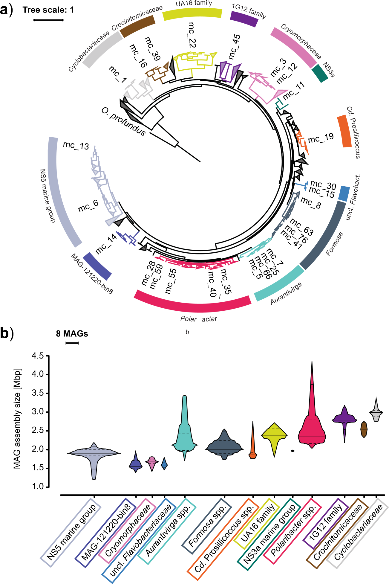 In marine Bacteroidetes the bulk of glycan degradation