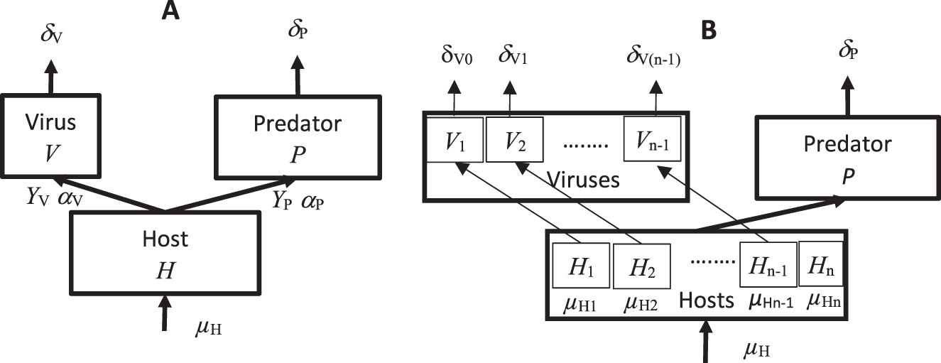 Host–virus–predator coexistence in a grey-box model with d