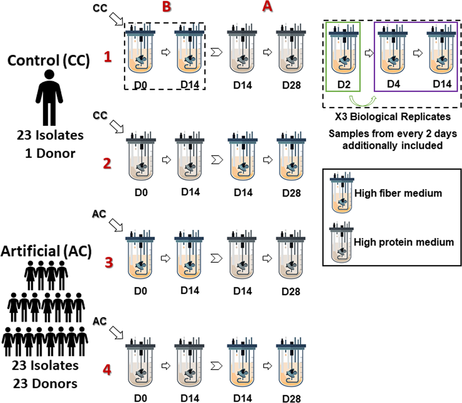 Drivers of human gut microbial community assembly