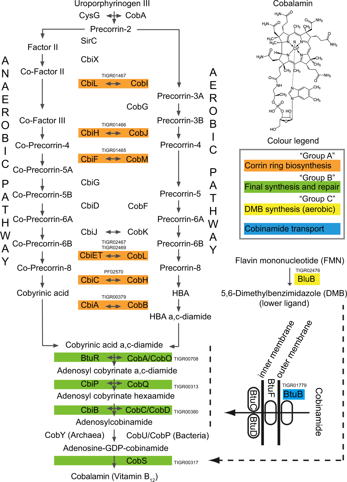 Metagenomic and chemical characterization of soil cobalamin production