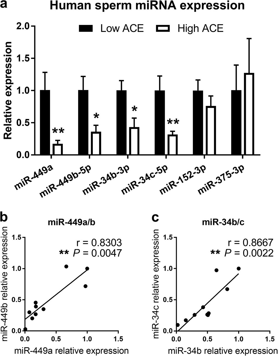 Reduced levels of miRNAs 449 and 34 in sperm of mice and men exposed to  early life stress | Translational Psychiatry