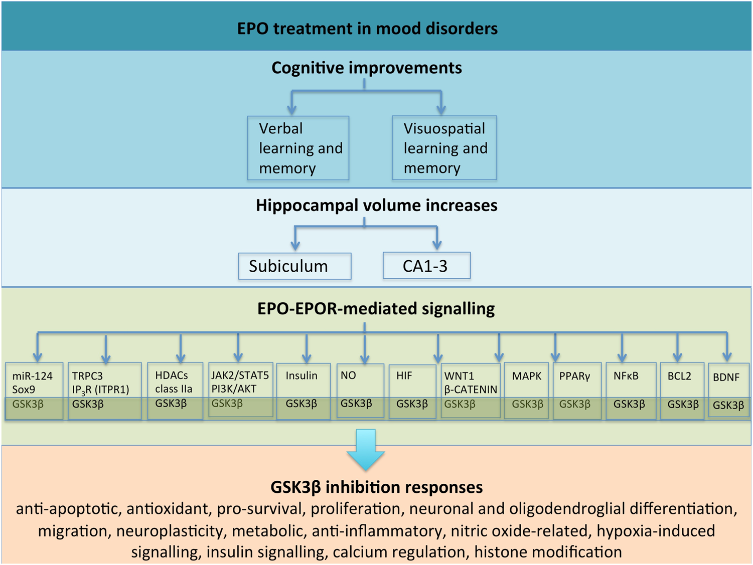 Gsk3 A Plausible Mechanism Of Cognitive And Hippocampal Changes Switching Regulators Using Lm 2575 2577 Induced By Erythropoietin Treatment In Mood Disorders Translational Psychiatry