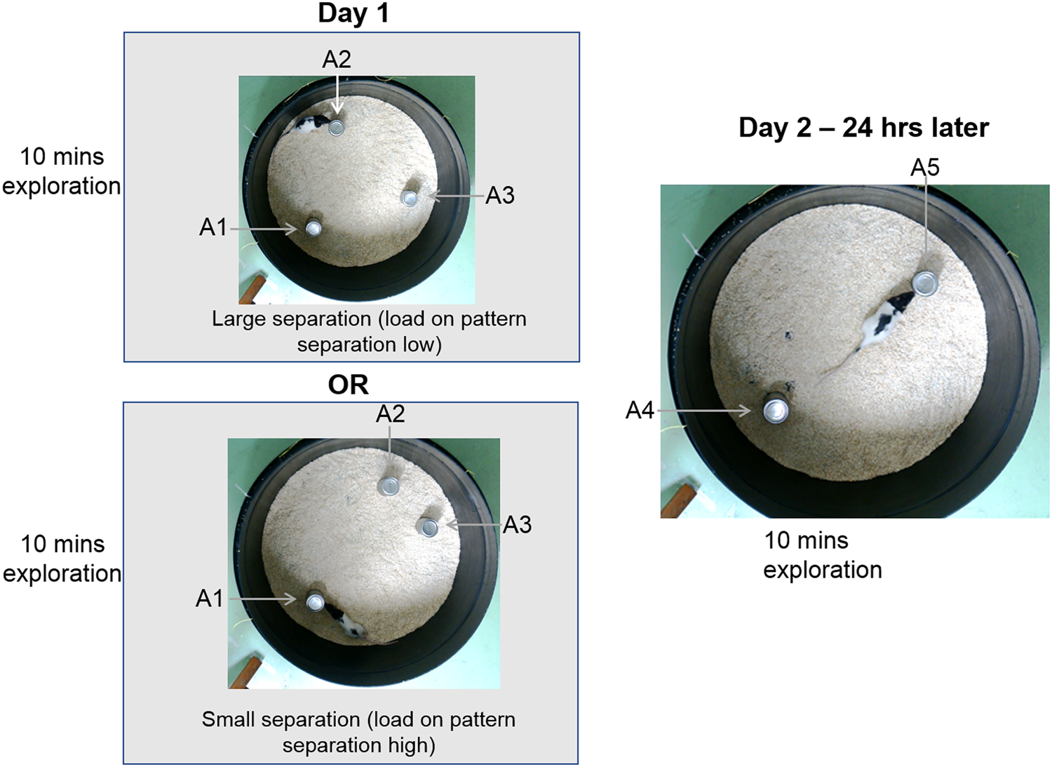 Now And Zen Lower Prenatal Stress >> Sex Specific Effects Of Pre Pubertal Stress On Hippocampal