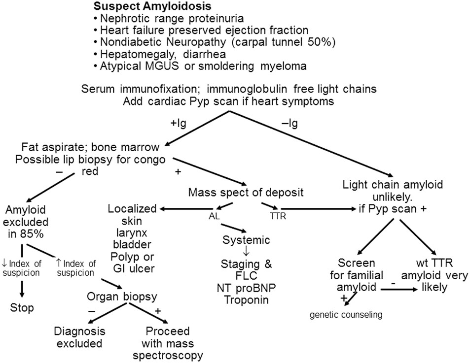 Immunoglobulin light chain amyloidosis diagnosis and