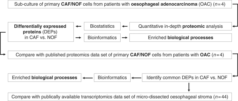 Quantitative Proteomic Profiling Of Primary Cancer Associated