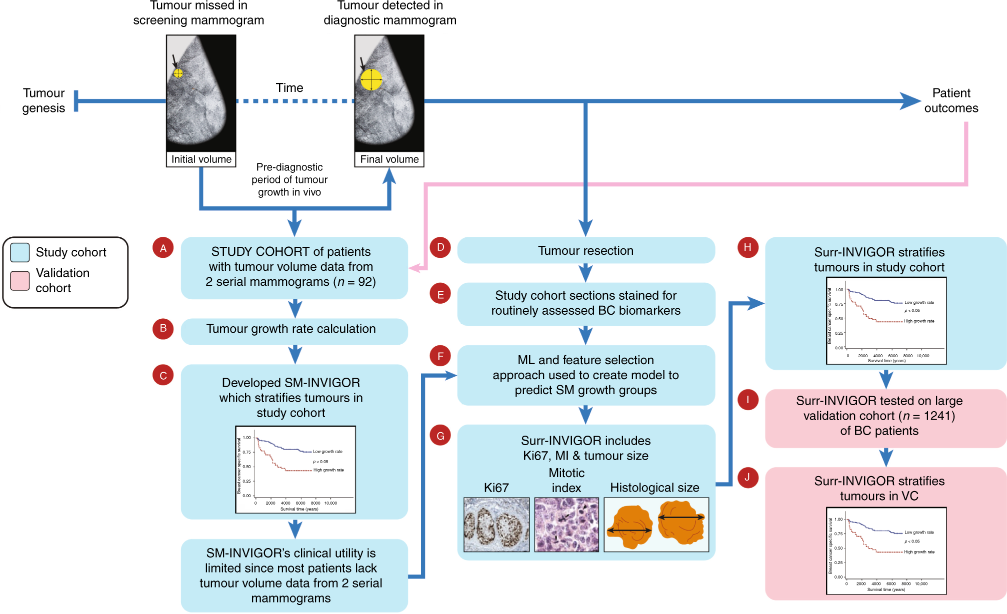 Machine learning-based prediction of breast cancer growth rate in vivo
