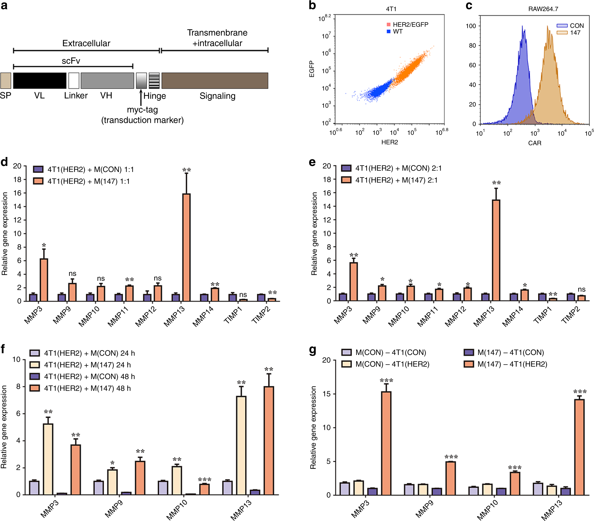 Chimeric antigen receptor macrophage therapy for breast tumours mediat