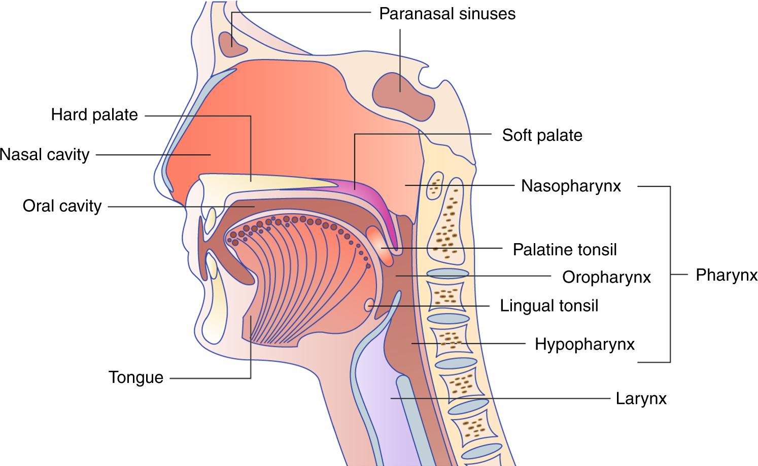 hpv human papillomavirus symptoms