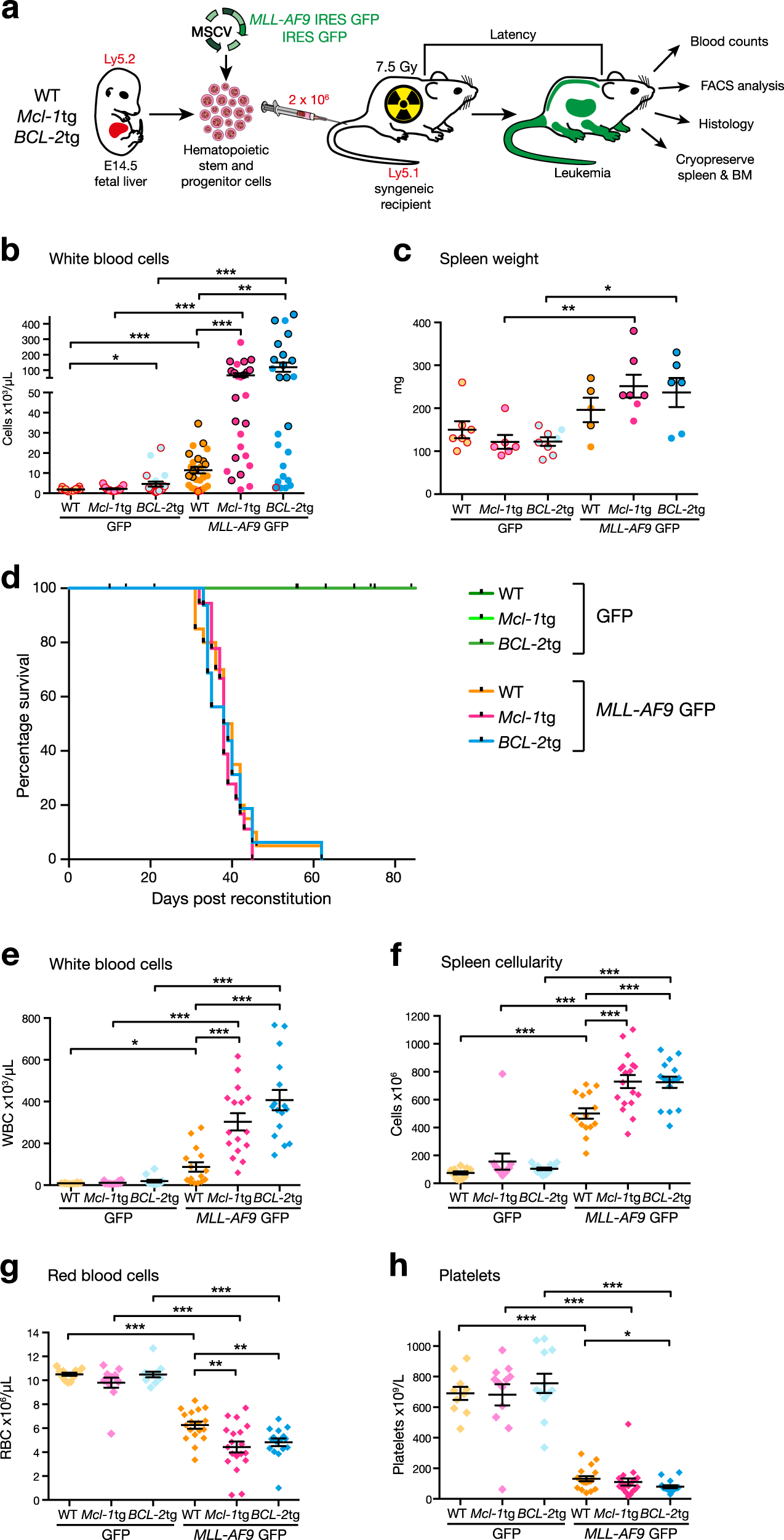 Impact Of Elevated Anti Apoptotic Mcl 1 And Bcl 2 On The Development Treatment Mll Af9 Aml In Mice Cell Diffeiation