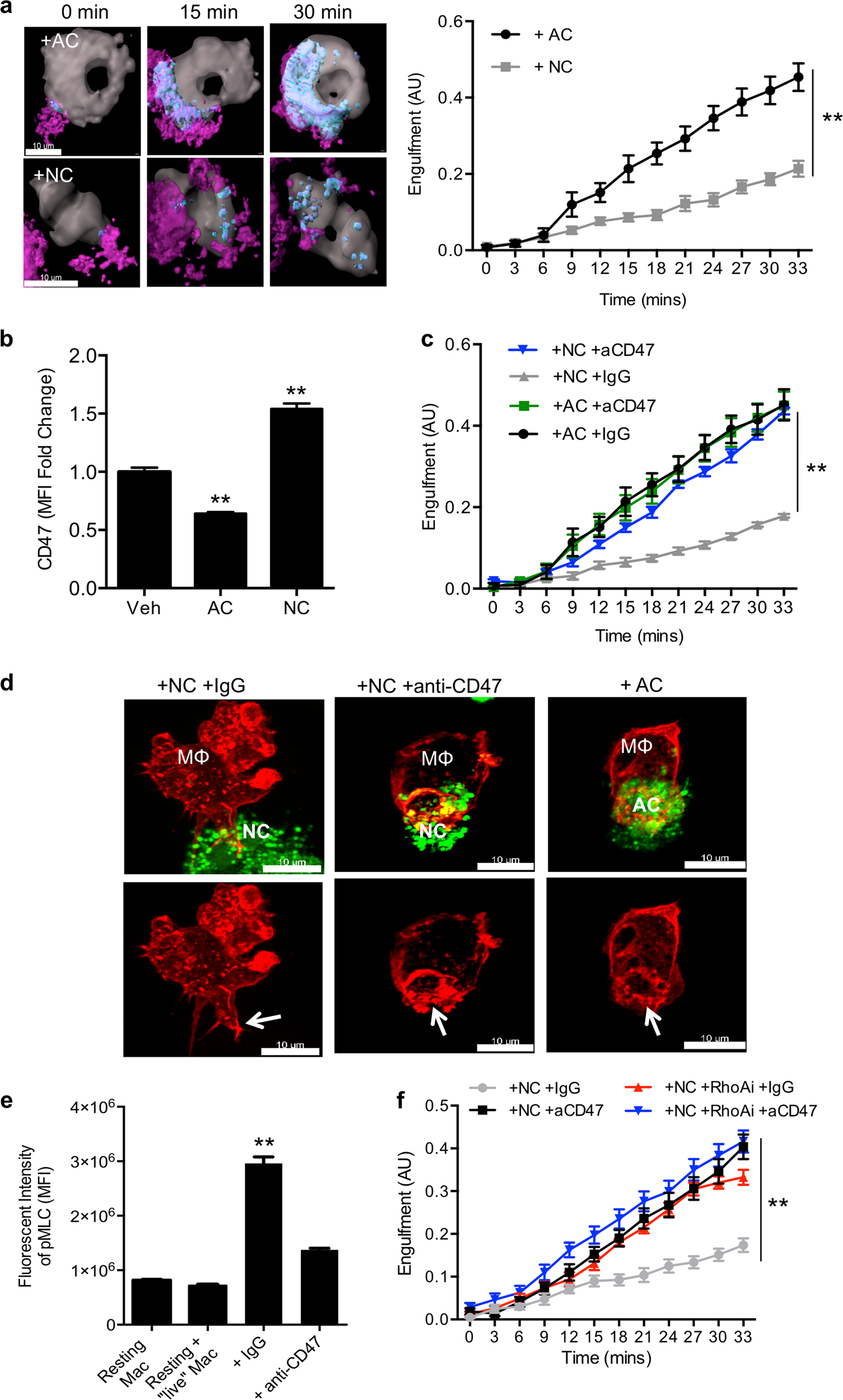 Resolvin D1 promotes the targeting and clearance of necroptotic