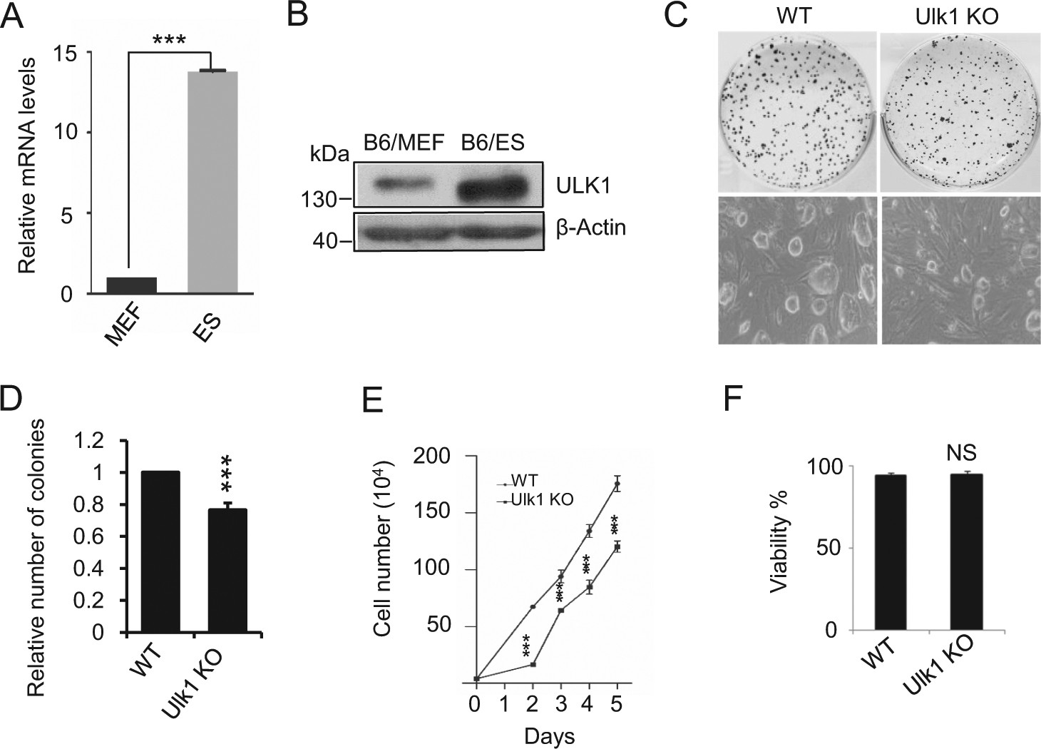 Phosphorylation Of Ulk1 By Ampk Is Essential For Mouse Embryonic Lm555 Electronics Schematic Diagram Two Stage Time Delay Circuit Part 29 Stem Cell Self Renewal And Pluripotency Death Disease