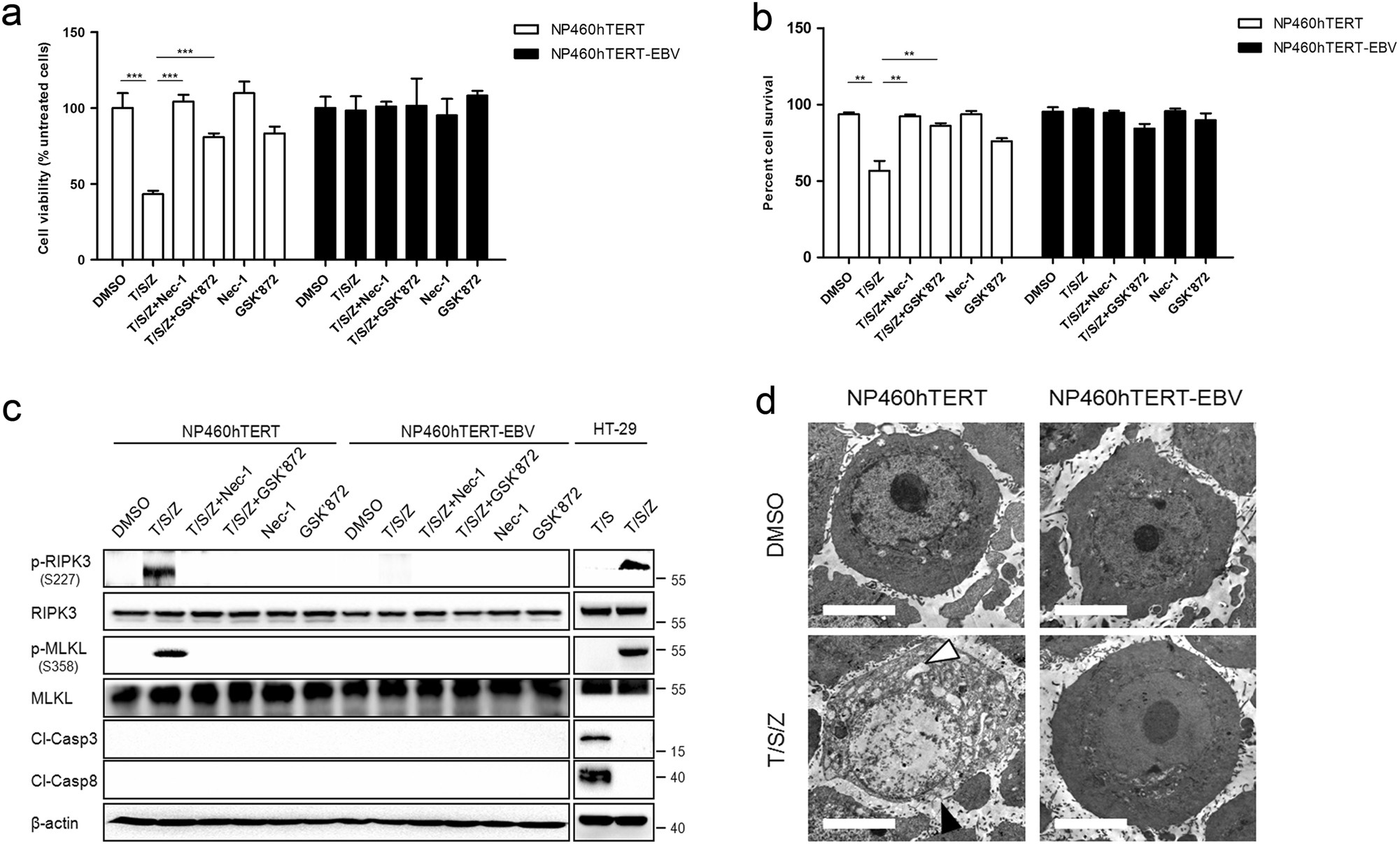 Epstein-Barr virus encoded latent membrane protein 1 suppresses