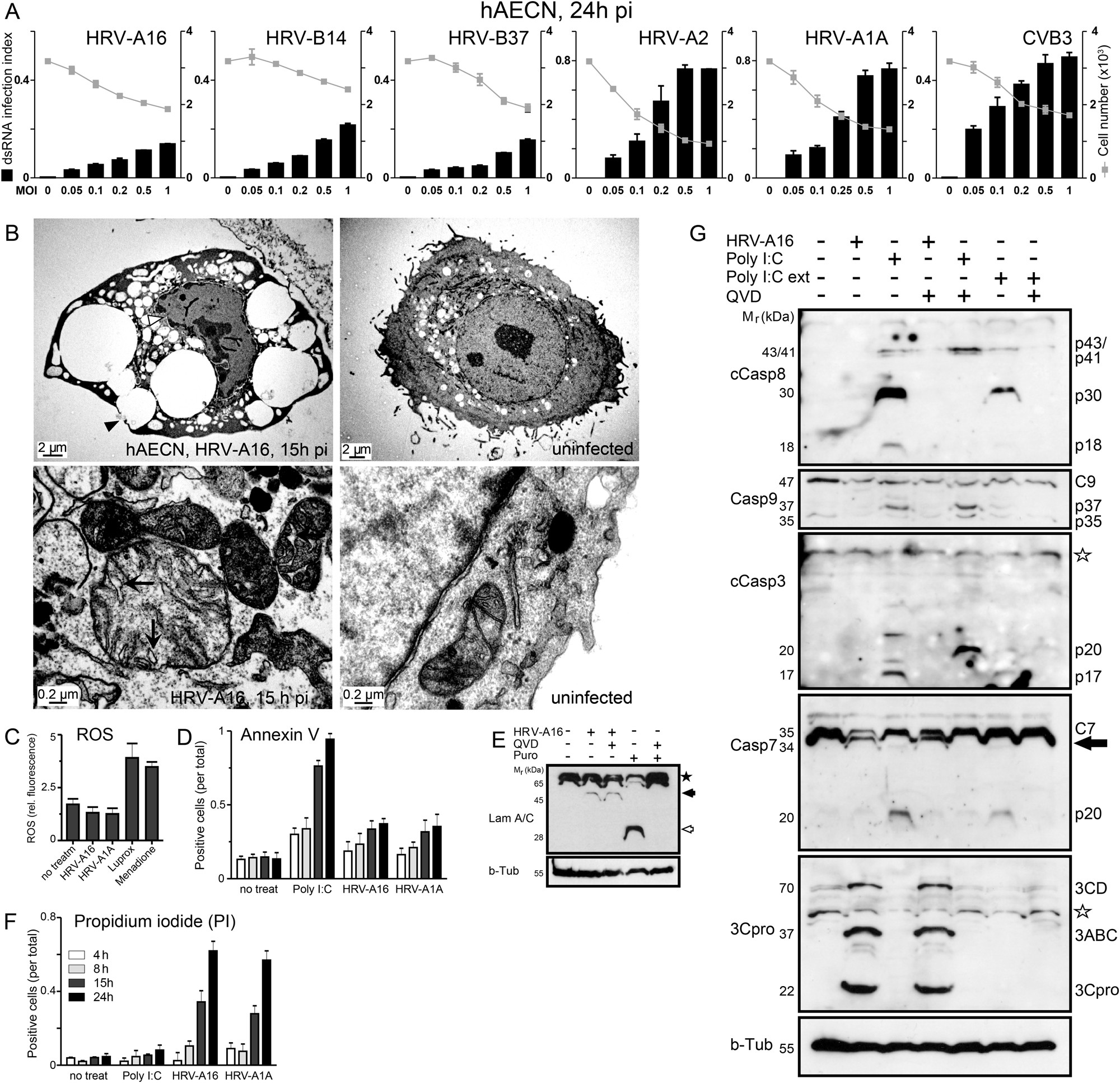 Rhinovirus 3c Protease Suppresses Apoptosis And Triggers Caspase X10 3 Way Switch Diagram Independent Cell Death Disease