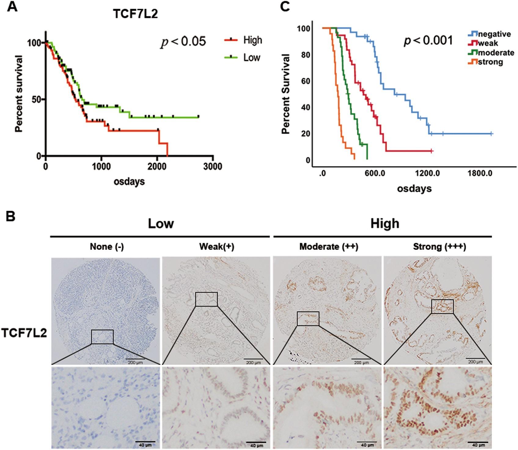 TCF7L2 positively regulates aerobic glycolysis via the EGLN2