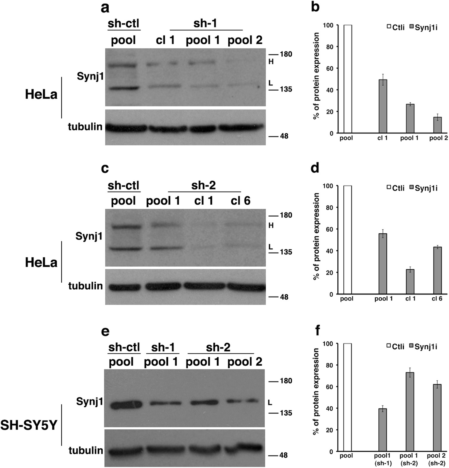 Alteration Of Endosomal Trafficking Is Associated With Early Onset Electrical Earth Pit Diagram Parkinsonism Caused By Synj1 Mutations Cell Death Disease