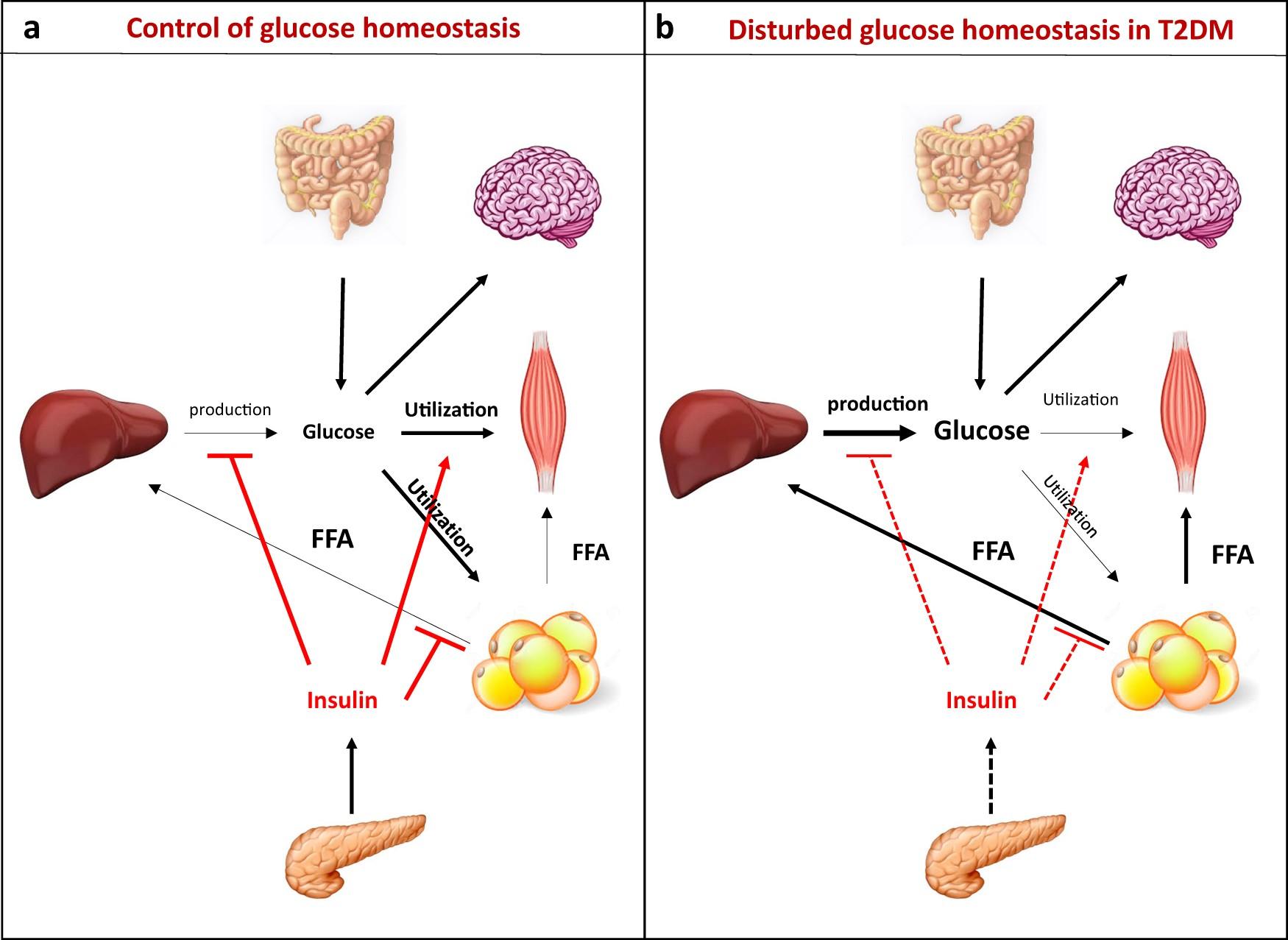 The Role Of Endoplasmic Reticulum Mitochondria Contact Sites In The