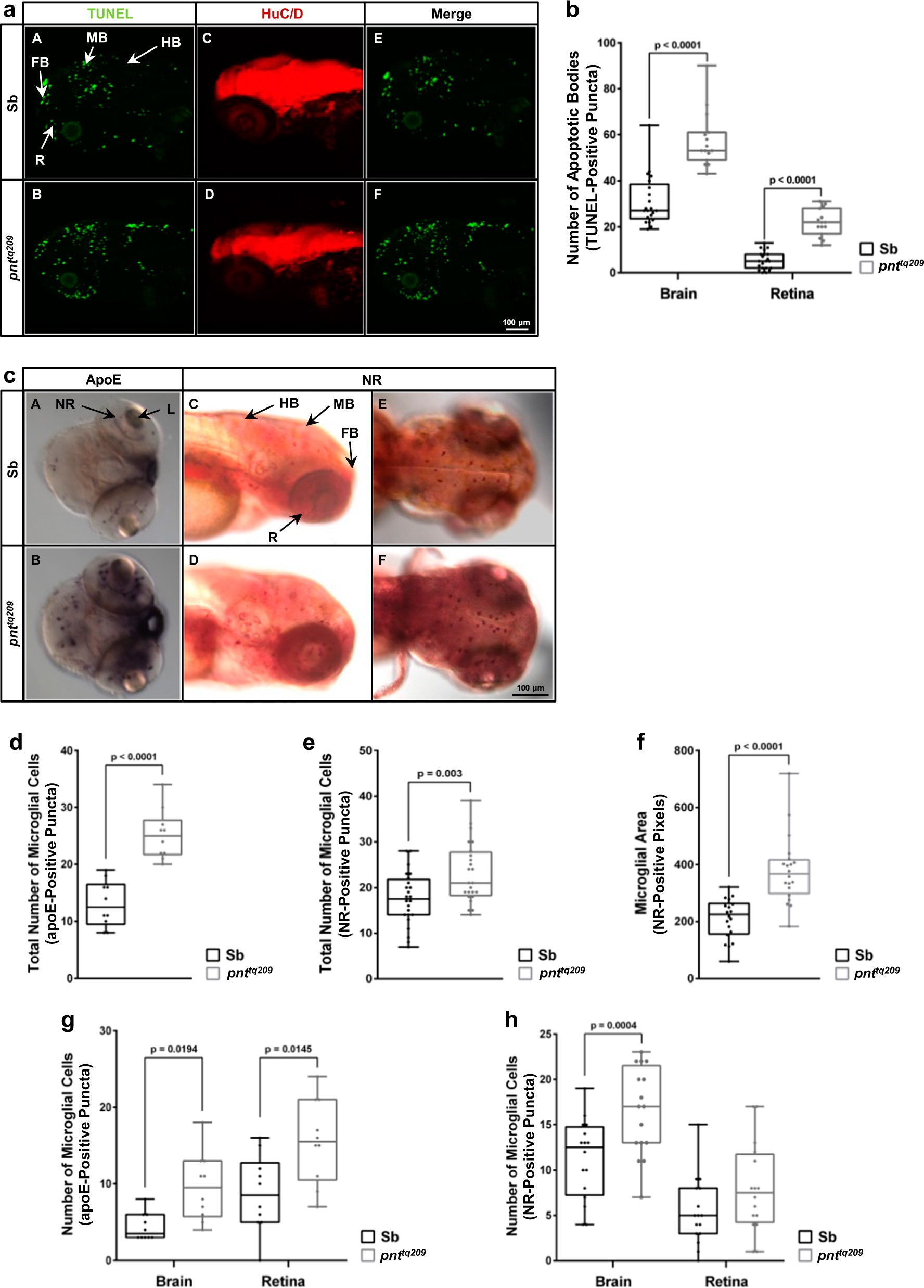 Reduction Of The Atpase Inhibitory Factor 1 If Leads To Visual Lightdark Switch With Relay Schematic Diagram Wiring Impairment In Vertebrates Cell Death Disease