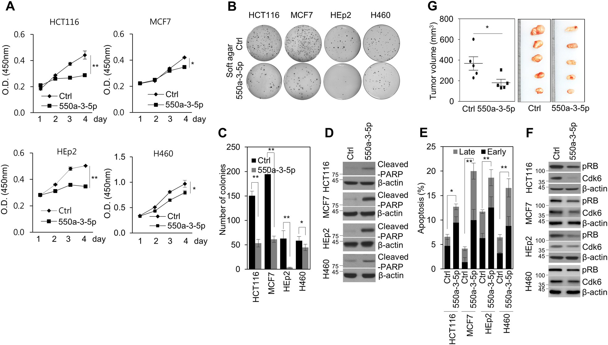 ebdd500e971 miR-550a-3-5p acts as a tumor suppressor and reverses BRAF inhibitor  resistance through the direct targeting of YAP