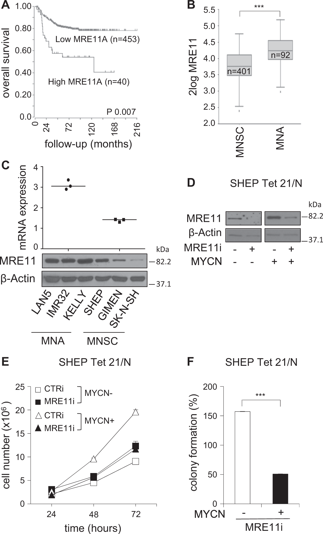 Mre11 Inhibition Highlights A Replication Stress Dependent Scytek Schematic Vulnerability Of Mycn Driven Tumors Cell Death Disease