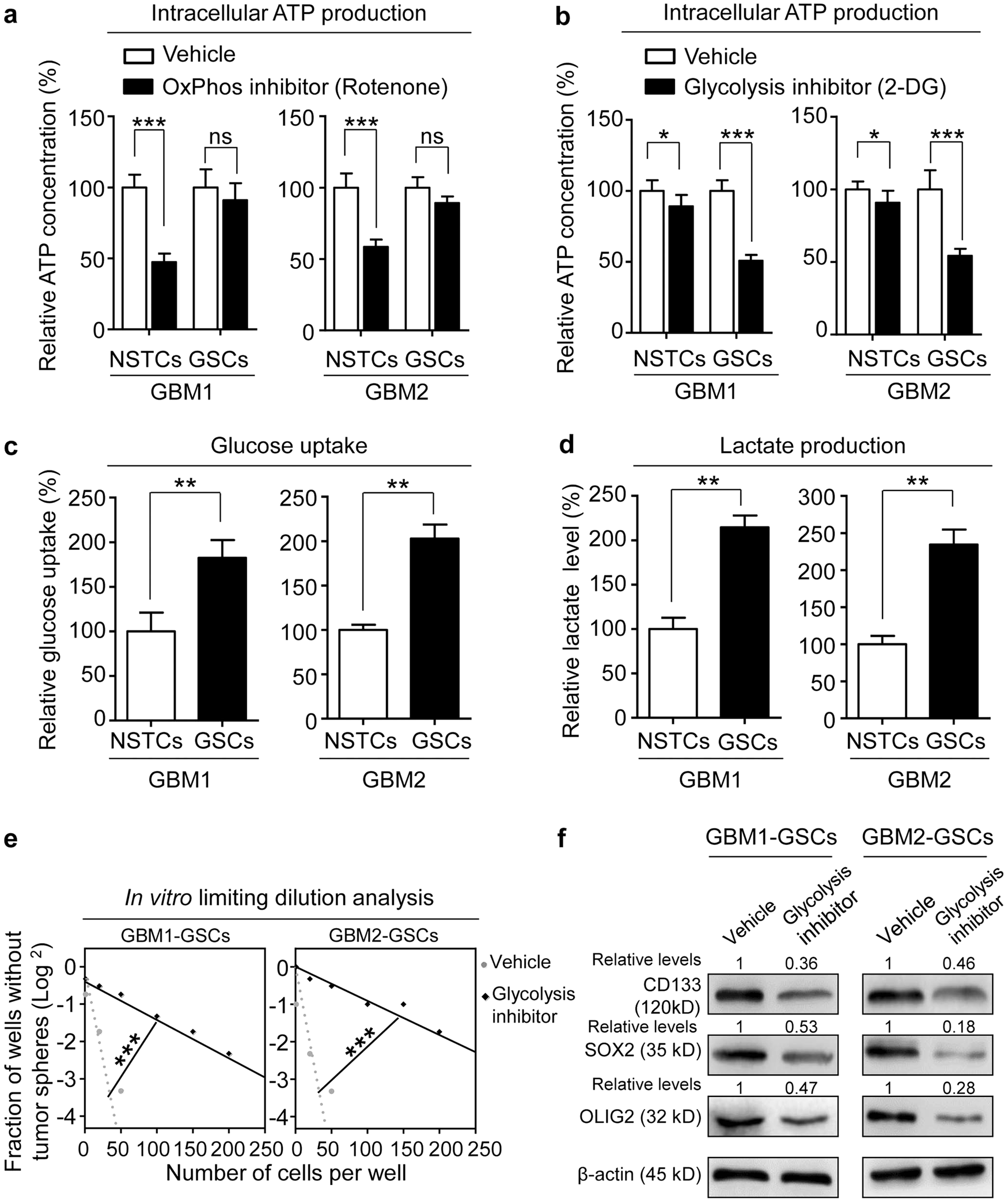 Vdac2 Interacts With Pfkp To Regulate Glucose Metabolism And Switching Regulators Using Lm 2575 2577 Phenotypic Reprogramming Of Glioma Stem Cells Cell Death Disease
