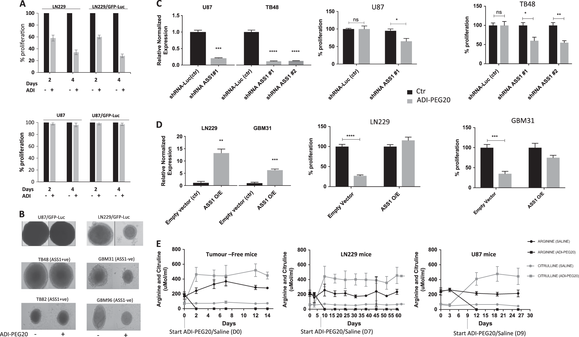 Efficacy of arginine depletion by ADI-PEG20 in an intracranial model of GBM  | Cell Death & Disease