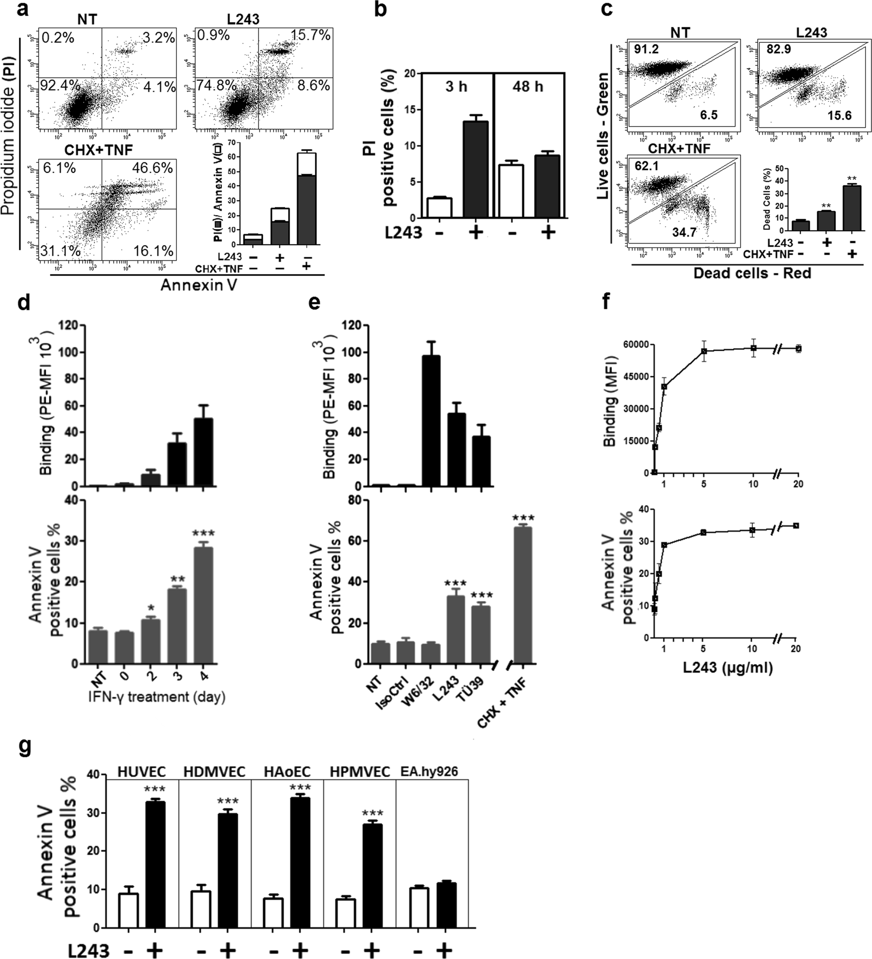 HLA class II antibodies induce necrotic cell death in human