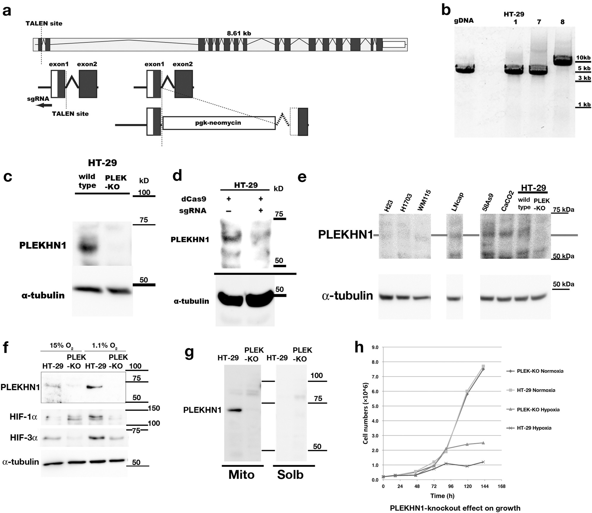 Plekhn1 Promotes Apoptosis By Enhancing Bax Bak Hetro Uk Researchers Create A Circuit Board That Completely Dissolves In Hot Oligomerization Through Interaction With Bid Human Colon Cancer Cell Death Discovery