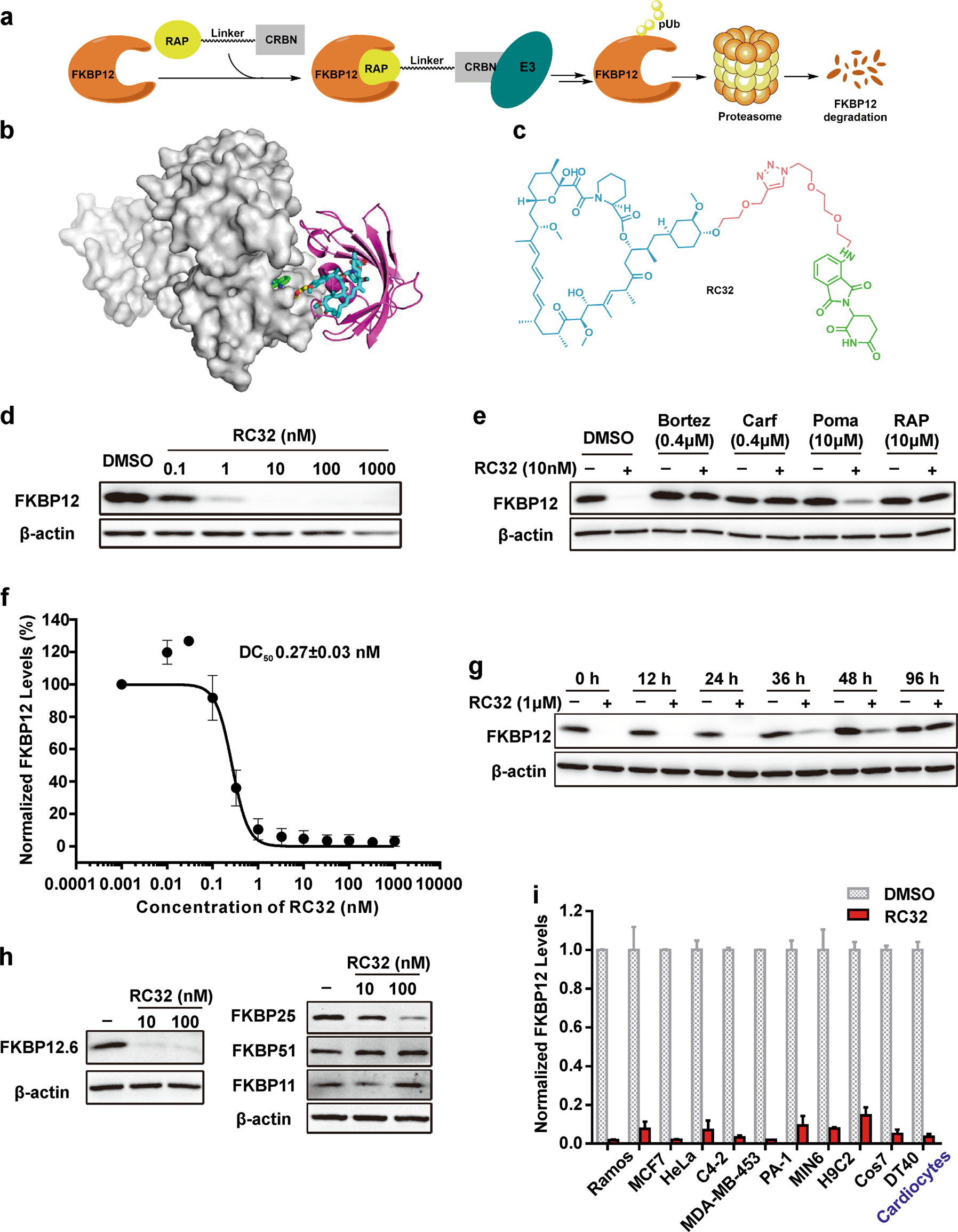 88edf95e79f A chemical approach for global protein knockdown from mice to non-human  primates