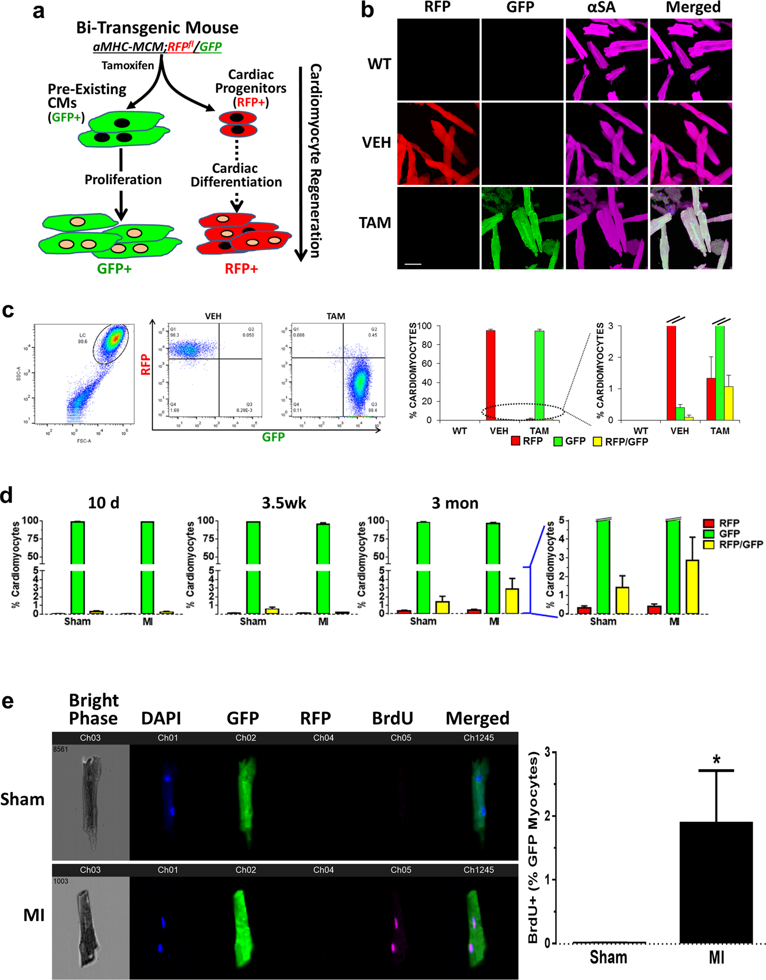 Single-cell imaging and transcriptomic analyses of endogenous