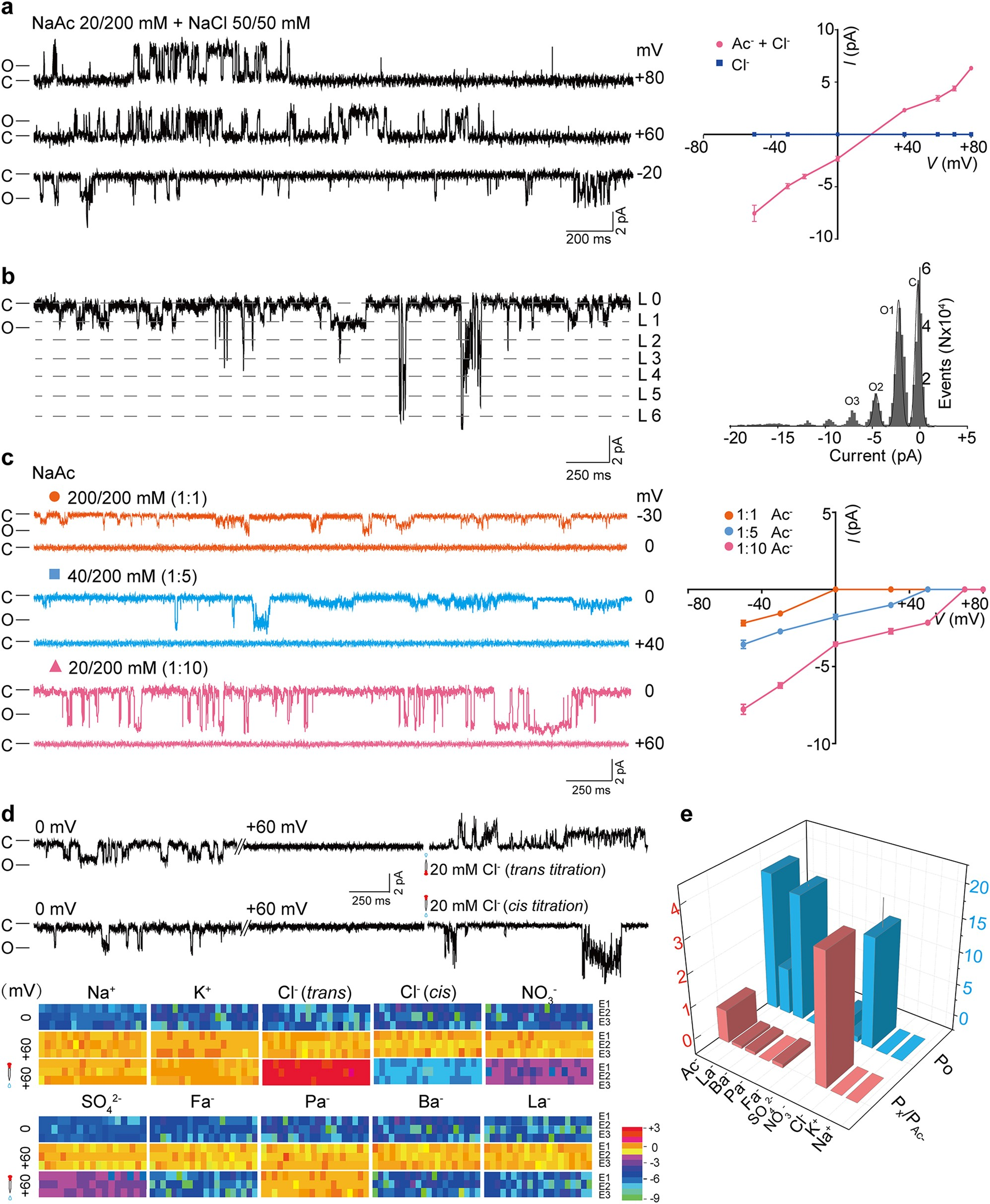 Succinate Acetate Permease From Citrobacter Koseri Is An Anion Electromagnetic Relay Equation Channel That Unidirectionally Translocates Cell Research
